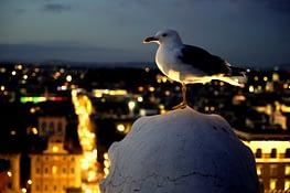 Rom Denkmal Vogel