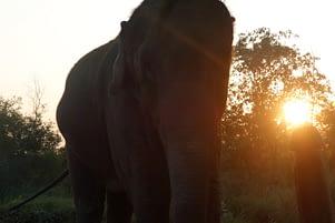 Bardia NP Elefant Sonnenuntergang