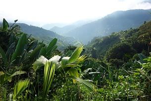 Ciudad Perdida Dschungel Ferne