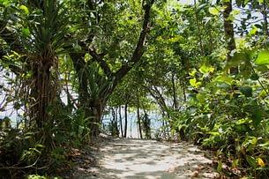 Daintree Forest Weg zum Meer