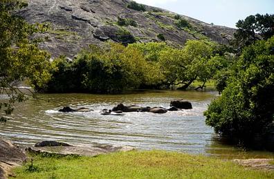 Yala Nationalpark Elefantenherde im Wasser