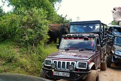 Yala Nationalpark Jeeps vor Elefanten
