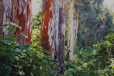 Usambara Mountains Regenwald Bäume