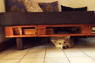 Arusha Utamaduni Simba unterm Sofa
