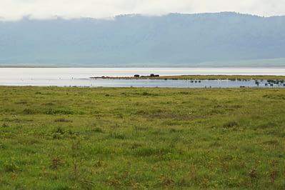 Ngorongoro Krater Hippos