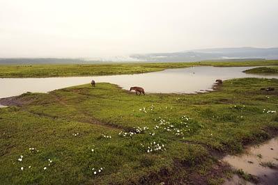 Ngorongoro Krater Hyänen weit