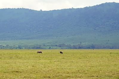 Ngorongoro Krater Nashorn I