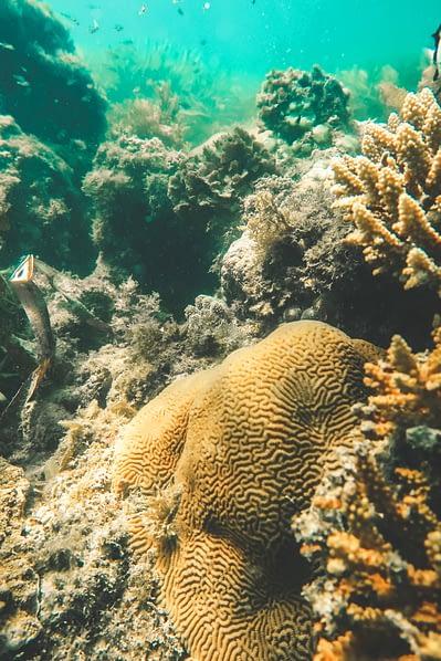 Bongoyo Unterwasserwelt