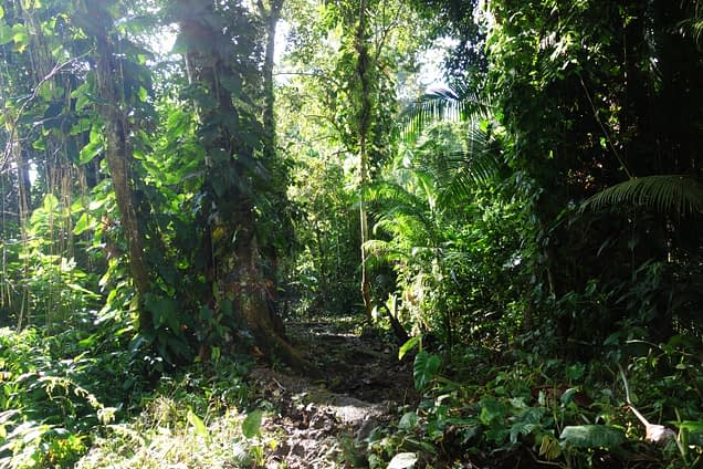 Ciudad Perdida Dschungel