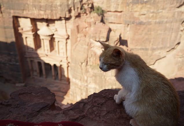 Petra Schatzkammer von oben Katze