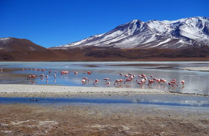 Salar de Uyuni Flamingos Lagune