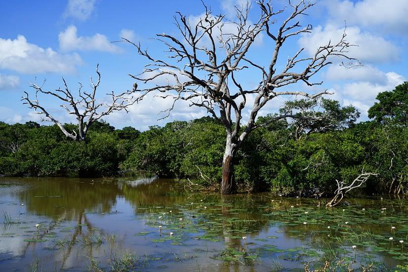 Yala Nationalpark Adler