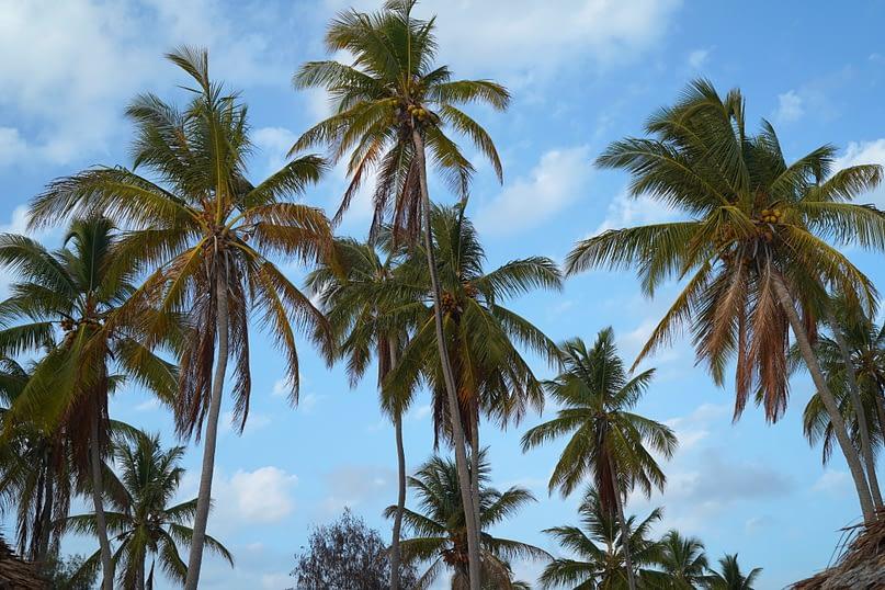 Paje Strand Palmen