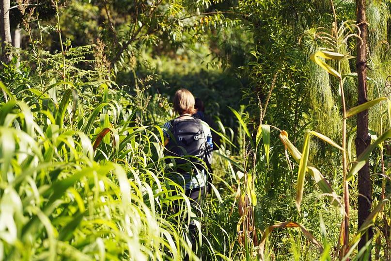 Usambara Wanderung Franzi im Feld
