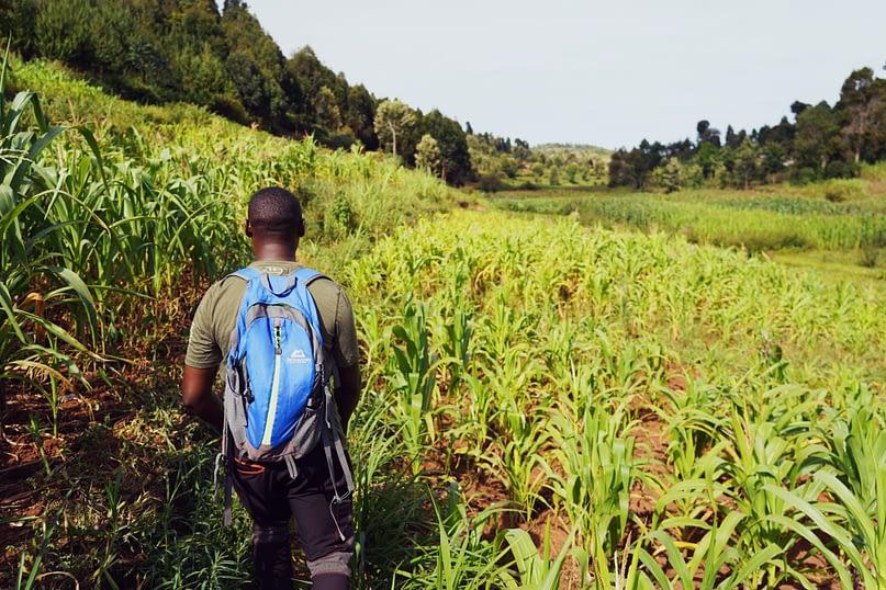 Usambara Wanderung Murtaza im Feld