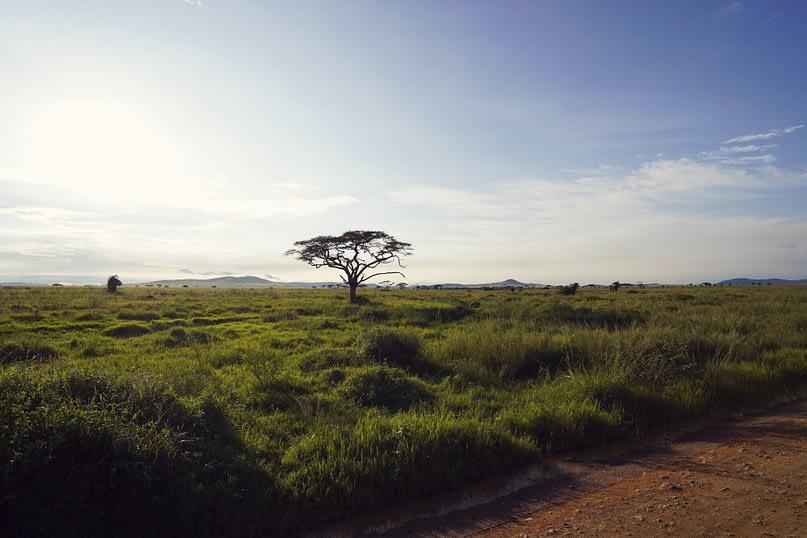 Serengeti Weite