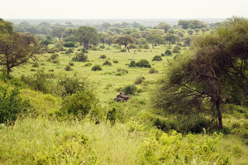 Tarangire Park mit Elefanten