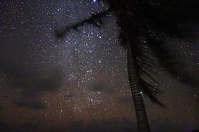 Sian Kaan Palme vor Sternenhimmel