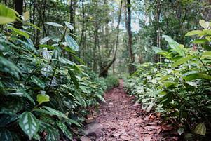 Selva Negra Waldweg