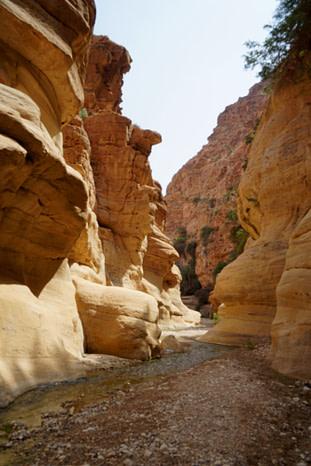 Dana Biosphere Canyon