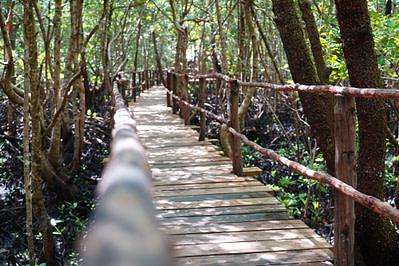 Jozani Forest Mangroven Weg