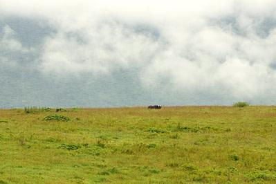 Ngorongoro Krater Nashorn II