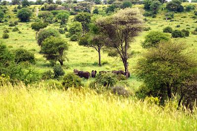 Safari Tarangire Elefanten Valley ohne Himmel