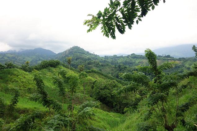 Ciudad Perdida Felder & Wälder