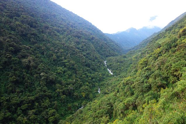 Peru Salkantay Trek Dschungel
