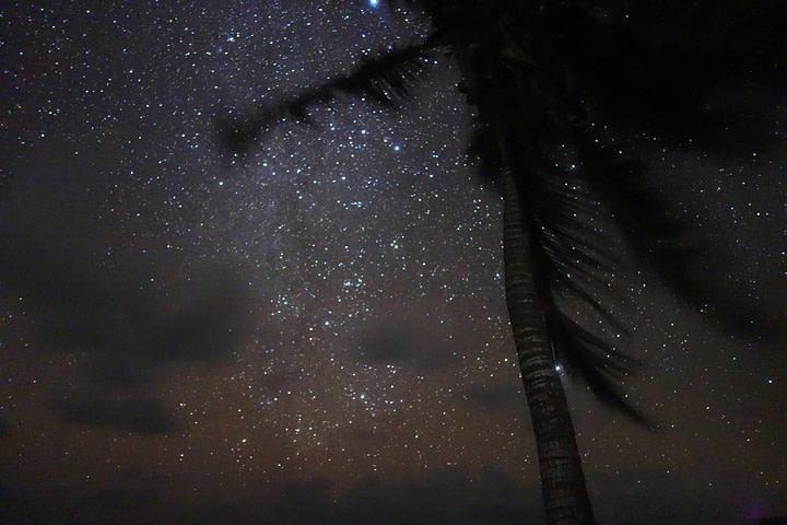 Sian Kaan Palme mit Sternenhimmel