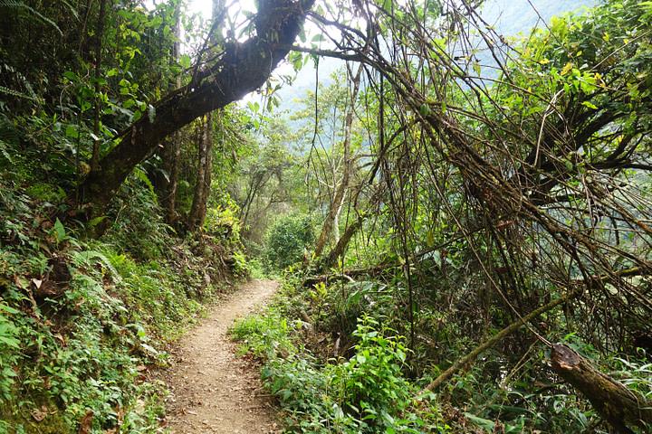 Salkantay Trek Dschungelweg