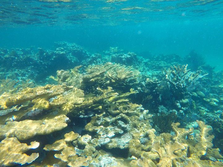Little Corn Island Korallenriff