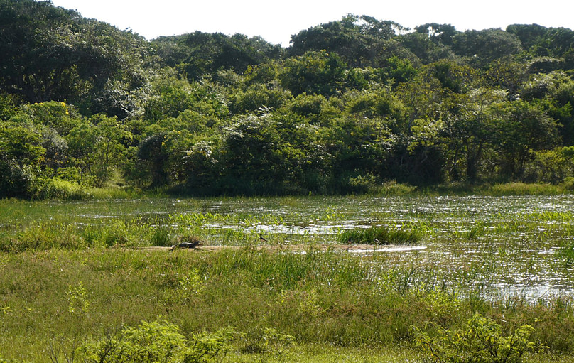 Yala Nationalpark Krokodil
