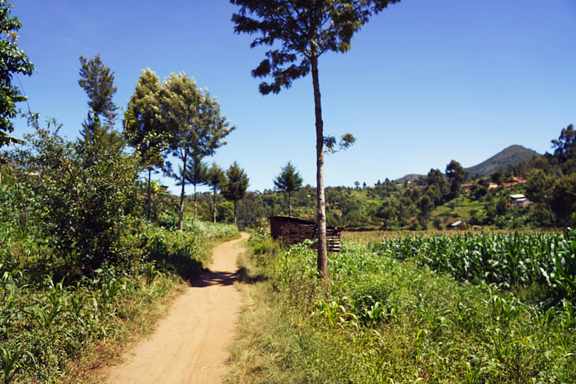 Usambara Wanderung Weg Felder