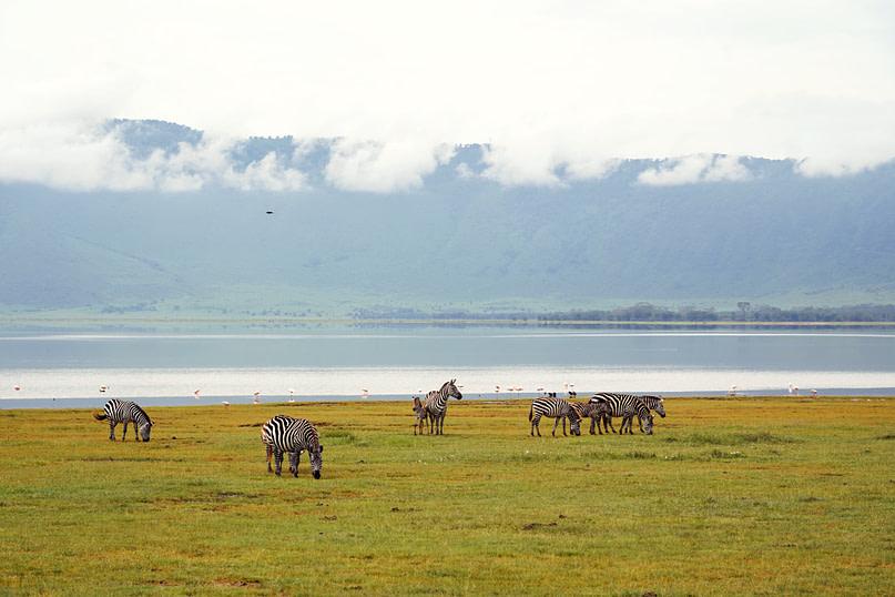 Ngorongoro Zebras vor See