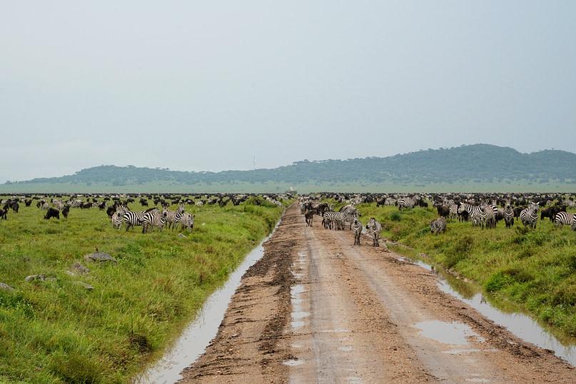 Safari Big Migration