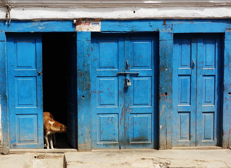 Kathmandu Hund blaue Tür