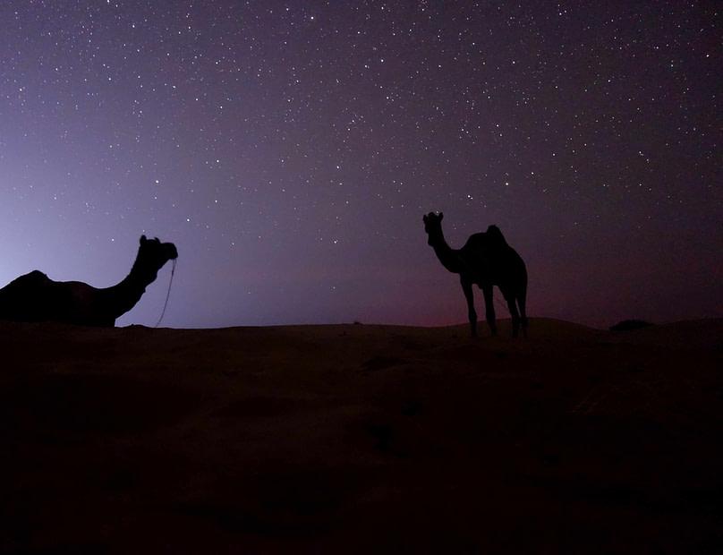 Jaisalmer Kamelsafari Kamele und Sternenhimmel