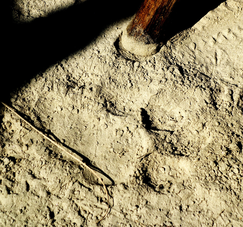 Bardia Nationalpark Tiger Spur